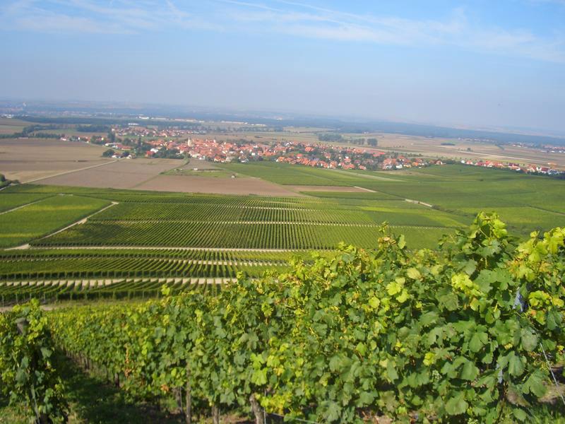 Bild Weingut Melber - Blick