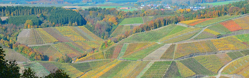 Bild Weinberg Cuvee - Rotweingut Jean Stodden - Rheinland-Pfalz