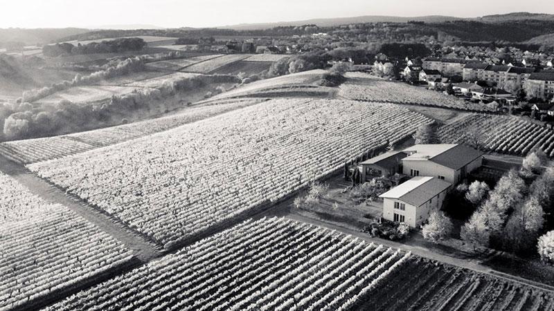 Bild Luftaufnahme Weingut Freimuth - Rheingau