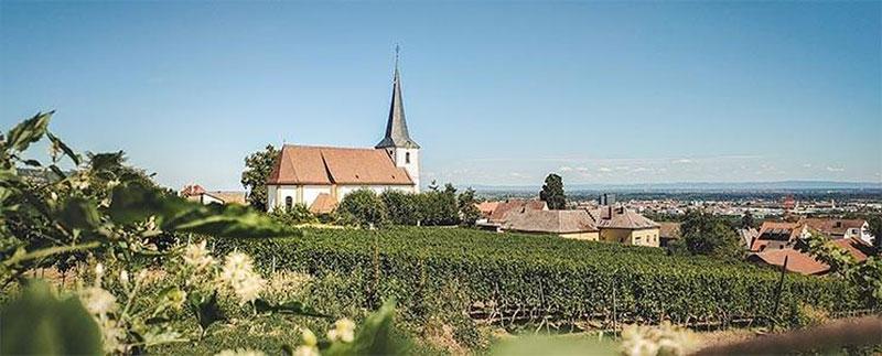 Bild - Weingut Nägele Weinberg - Pfalz